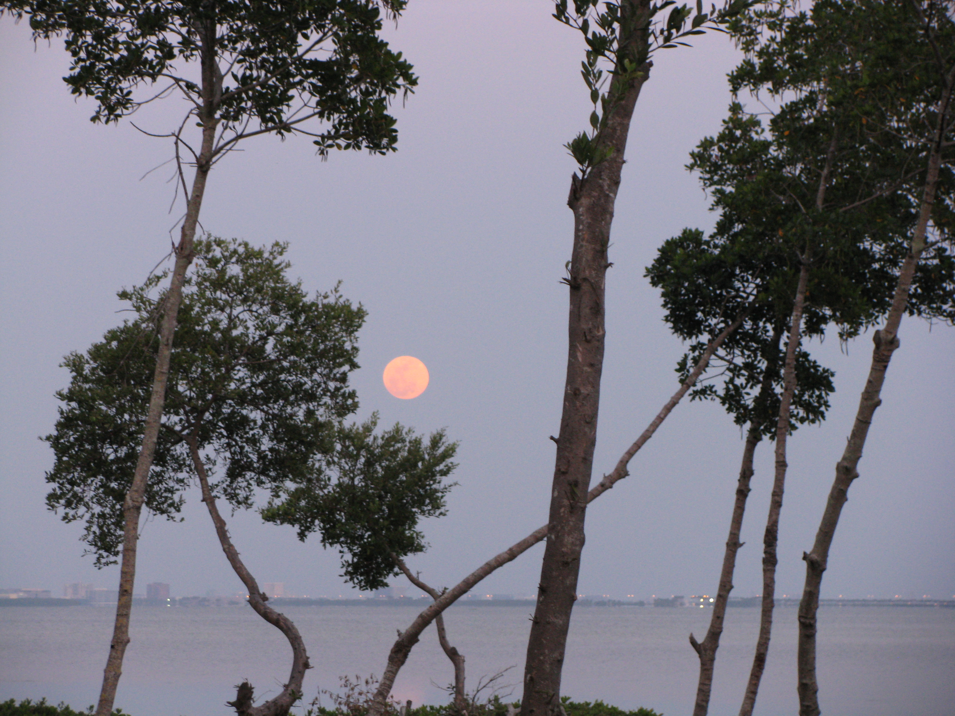 Super moon Tampa in the backfground 3